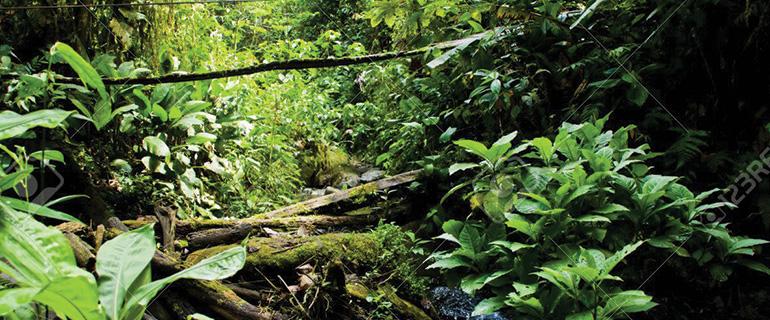 CONSIDERA pone en marcha en Ecuador la implementación de una estrategia de socialización de la Declaratoria Forestal de Orellana