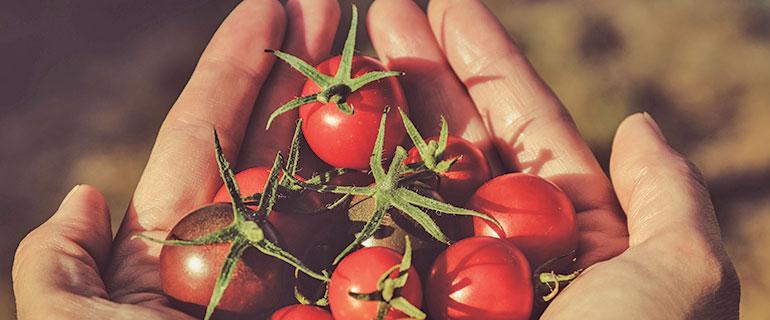 ¡NO al Desperdicio de alimento! Reflexiones sobre el futuro!